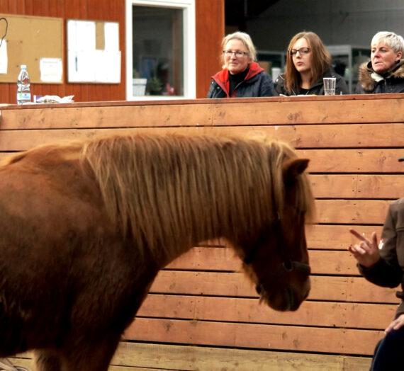 Psykologi: Følelser åbner os og lukker os i – inden i – Og sådan er det også med hestene!