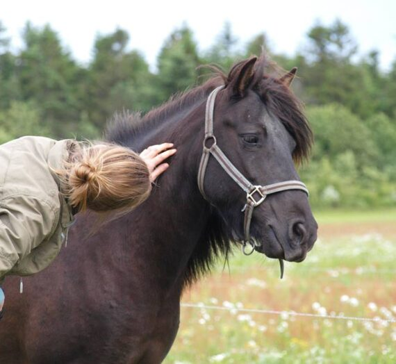 Psykologi: Det er ikke langhåret eller trylleri at problematiske heste pludseligt bliver trygge