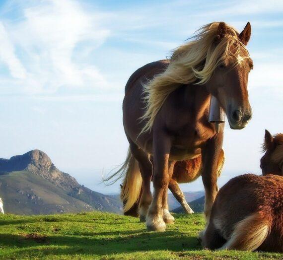 Psykologi: Heste er geniale til at hjælpe mennesker.