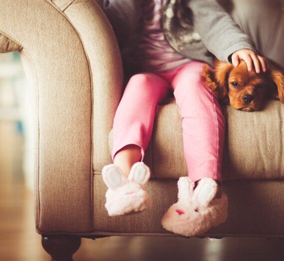 Psykologi: Derfor er din hest, hund, kat så vigtig for dig.