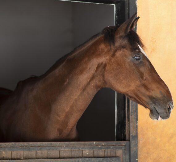 """Psykologi: """"Skal jeg sælge min hest og få en ny? Synes ikke helt kemien er der længere"""""""
