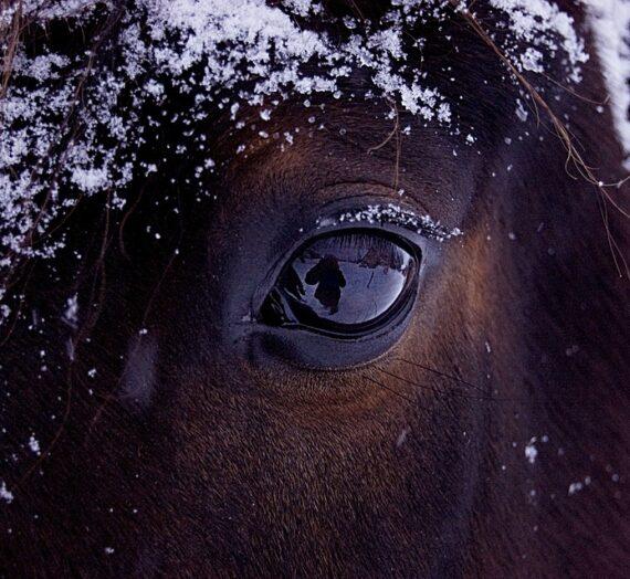 Adfærd: Helt almindelige problemhestes problemer med helt almindelige hestemennesker.