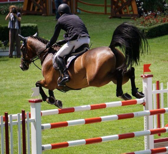Psykologi: Derfor har mange ride og konkurrenceheste ikke en ven i deres rytter