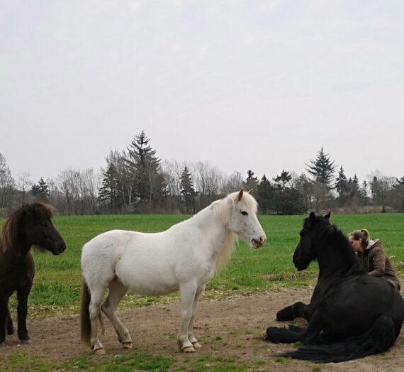 Danmarks mest grundige og omfattende holistiske terapeut uddannelse med heste.