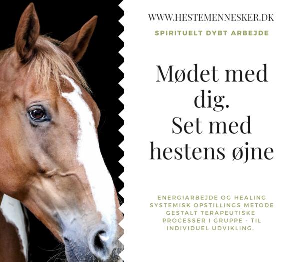 Du inviteres, til et møde med dig – set med hestens øjne.