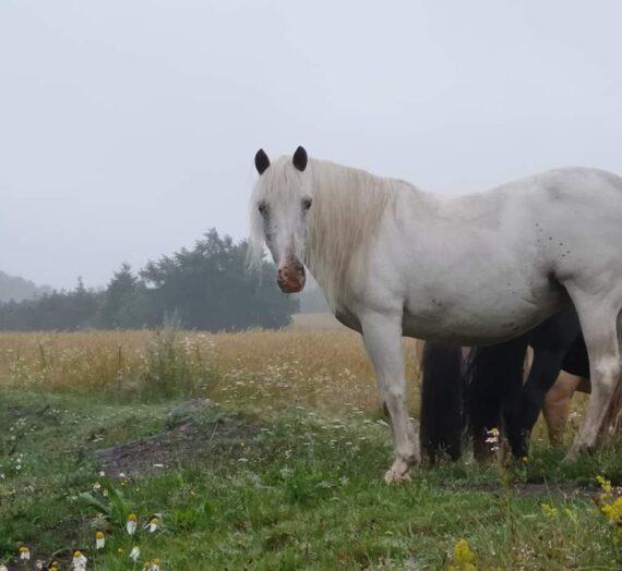 Sådan foregår en hestesession med mig, hos dig og din hest.