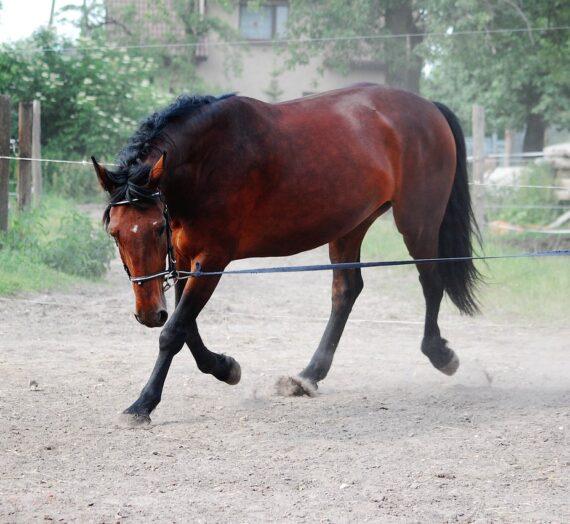 Er din hest en kogende frø?